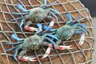 Seafood Restaurant Crab Decor, Realistic Crab Replicas 3 to 4 inch Volume Priced