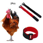 Внешний вид - 2pcs Nylon No Crow Collars for Roosters Noise Free Belt Collars Poultry Supplies