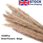 15/30 Large Natural Dried Pampas Grass Reed Home Wedding Flower Bunch Home Decor