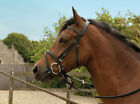 FLASH BRIDLE horse pony cob in stock with free rubber grip reins black or brown