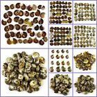 Gemstone ammonite fossil cabochon wholesale 100g