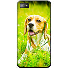 Beagle Dog Hard Case For Blackberry Z10
