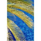 Poster Print Wall Art entitled Palm Tree, South Beach, Close Up; Miami, Flroida