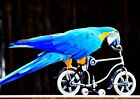 TROPICAL BIRDS MACAW PARROT ON BIKE POSTER PICTURE PRINT Sizes A5 to A0 **NEW**