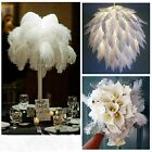 x10 NEW Jumbo White Natural Ostrich Feathers Home Decor Wedding Party Decoration
