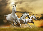 HD Print art Oil Painting on Canvas Modern Home Deco Animals beautiful Horse d85