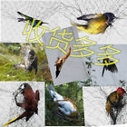 Wholesale hunting bird net to catch bird nets bird nets nylon nets