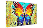 Abstract Butterfly Splatter on Framed Canvas Prints Animal Wall Art Pictures
