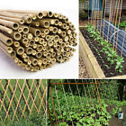 BAMBOO 7FT GARDEN CANES STRONG THICK FENCING PLANTS HEAVY DUTY SUPPORT (10-14MM)