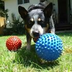 Aussie Dog Mitch Ball Hard Red or Blue Durable Non Toxic Floats Toy
