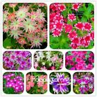 100 Pcs/Bag Phlox Twinkle Star Flower Seeds