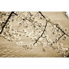 Wall Decal entitled Sepia Cherry Blossoms II