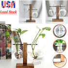 Wooden Stand Glass Terrarium Container Hydroponics Plant Flower Pot Desk Vase US