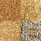 ORGANIC OAT, BARLEY, RYE, WHEATGRASS GRAIN SEEDS -JUICING SPROUTING CAT GRASS