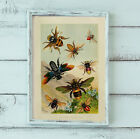 """Exotic Honey Bees Swarm Insects Making Honey Poster Print 6x9"""" to 16x24"""" Poster"""
