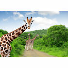 Jungle Forest Grassland Backdrop Photography Zebra Lion Giraffe Photo Background