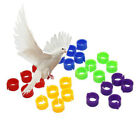 100Pcs Plastic Birds Poultry Duck Pigeons Dove Parrots Leg Foot Band Clip Rings