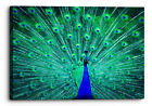 Vibrant Peacock Green Blue Bird Canvas Wall Art Picture Home Decoration