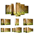 44 Shapes PREMIUM Canvas Picture/Print Wall Art Forest Sun Rays 0156 en