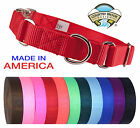 Country Brook Design® Heavyduty Nylon Martingale with Premium Buckle