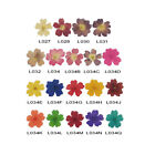 DF010 20 Pcs, 200 Pcs 15 x 15mm Nail Art Mini Dried Flower Set-Verbena hybrida