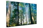 Tall Tree Forest on Framed Canvas Wall Art Home Deco Pictures Landscape Prints