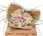 The Flower Rooms - Classic Alstroemeria Flower Bunch Sorry Flowers Birthday Gift
