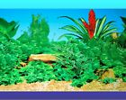 AQUARIUM BACKGROUND POSTER - LOVING - 30cm 50cm or 60cm(H) - BUY by Lineal METRE