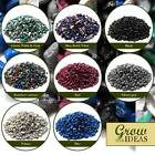 Steller Strikingly Colourful Gravel for Garden Aquarium Terrariums 5-8MM | 500G