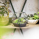 Clear Glass Geometric Terrarium Pentagon Ball Glass Geometric Terrarium Planter