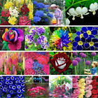 Gardens Potted Seeds Rare Flowers Various Exotic Hydrangea Orchid Ideal