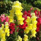 Various Exotic Hydrangea Orchid Ideal Gardens Potted Seeds Rare Flowers
