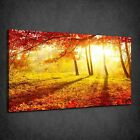 BEAUTIFUL RED ORANGE SUNSET AUTUMN FOREST BOX CANVAS PRINT WALL ART PICTURE