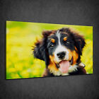 BERNESE MOUNTAIN DOG OIL PAINTING STYLE BOX CANVAS PRINT WALL ART PICTURE