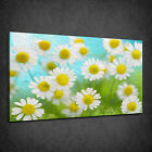 CHAMOMILE FLOWERS OIL PAINTING STYLE BOX CANVAS PRINT WALL ART PICTURE