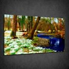 BEAUTIFUL FAIRY TALE DREAMLAND FOREST BOX CANVAS PRINT WALL ART PICTURE