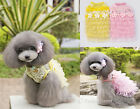 Spring Soft Cotton Dog Dress w Lace Tiers Tutu Flower For Special Occasions S-L
