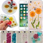 Pressed Real Dried Flower Daisy Case Transparent Cover For iPhone 6/6S/7/8 Plus