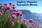 Synergistic Blends of Essential Oils all at 10ml size