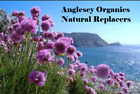A to Z of Natural Replacers