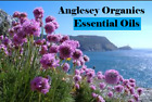 A-Z OF ESSENTIAL OILS 10ml* Spend £20 and get fab Xmas freebies worth  over £20