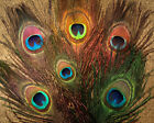 NATURE'S SPIRIT DYED OVER NATURAL PEACOCK EYES FEATHER FOR FLY TYING PICK COLOR