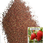100Grain/Pack Red Strawberry Seeds Garden Plant Sweet And Delicious Potted Fruit