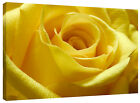 Canvas Wall Art Picture Print Yellow Rose Flower