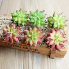 3pcs Succulents Plants Home Ornaments Artificial Flowers Mini Lotus Home Decor