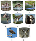 Osprey Bird Of Prey Lampshades, Ideal to Match Osprey Wall Decals & Stickers