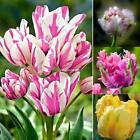 New Nice Adorable Flower Fragrant Seeds Fragrant Blooms Tulip Seeds ZZ