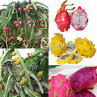 20 Seeds Red/White/Yellow Pitaya Dragon Fruit Seeds Fragrant Cactus Rare Exotic