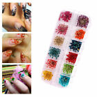 12 Color Novel Dry Dried Flower Leaves Acrylic Nail Art Tips Decor Supplies