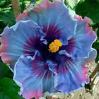 50Pcs Rare Exotic Giant Flower Seeds Home Garden Planting Mixed Colors